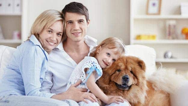 Wills & Trusts dog-young-family Direct Wills Highwood Hill